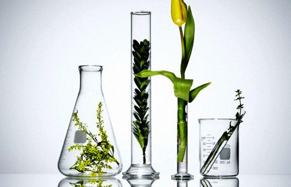 Plants in laboratory glassware